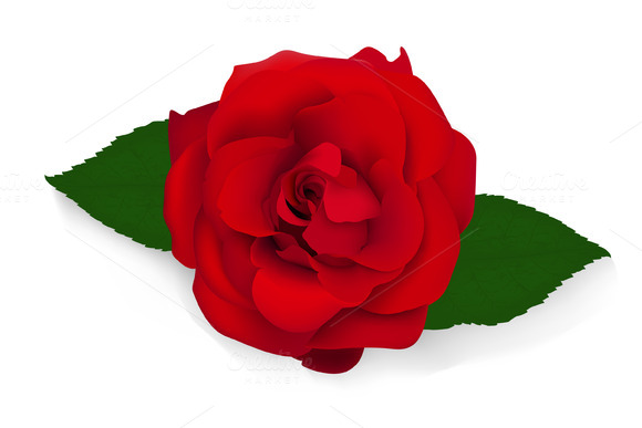 Red Rose Vector Illustration