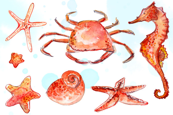 Beach Animals Clipart