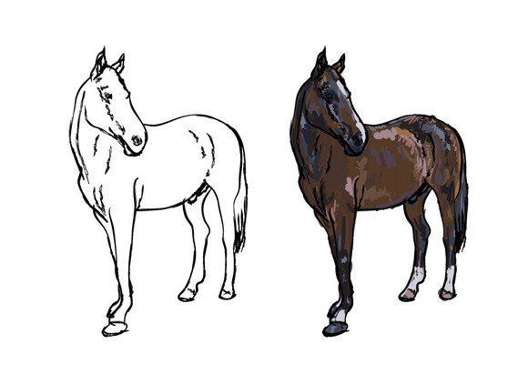 Drawing Of Elegance Horse