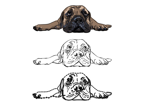 Drawing Of Lying Bullmastiff