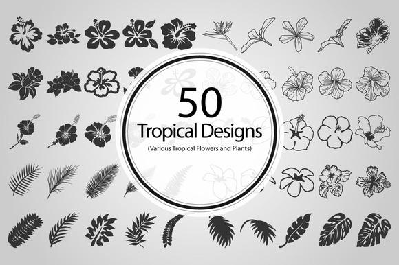 50 Tropical Designs