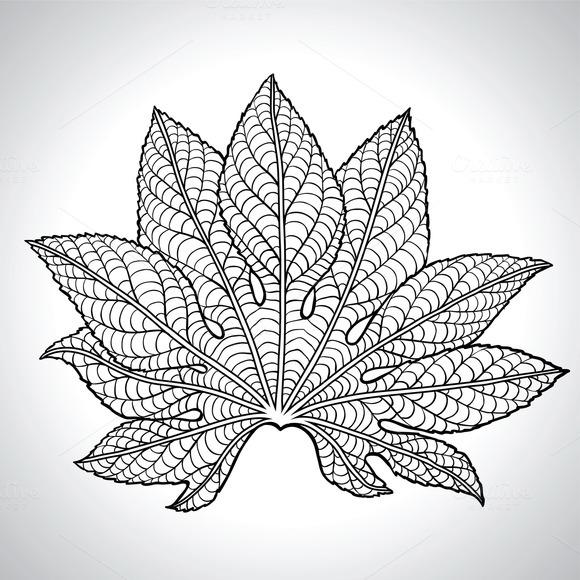 Natural Macro Leaves