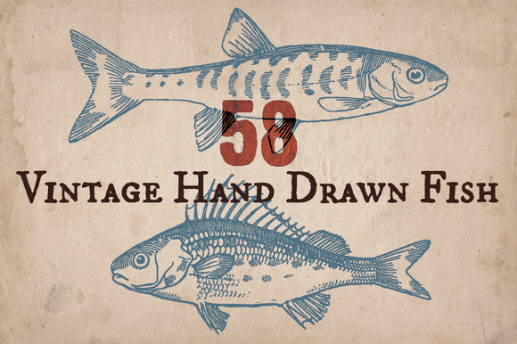 58 Vintage Hand Drawn Fish