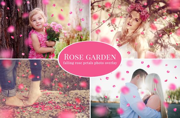 Rose Garden Pink Petals Overlay