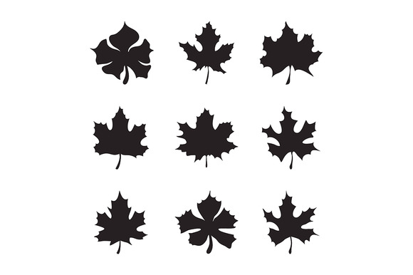 Maple-leaf Silhouette