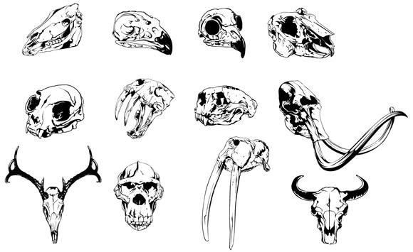 Animal Skulls Vector Pack