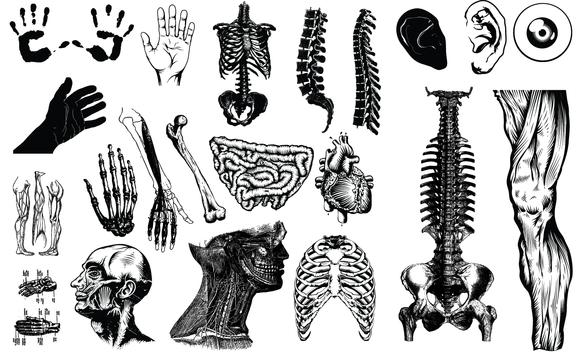 Anatomy Vector Pack