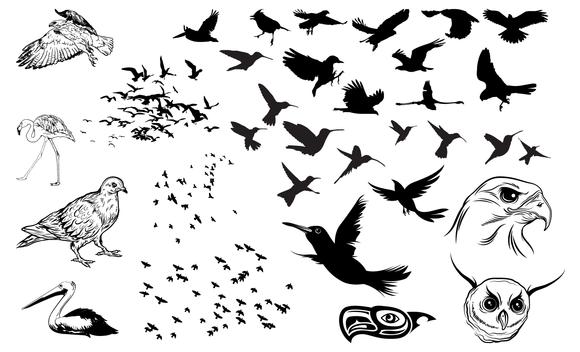 Flock Of Birds Vector Pack 2