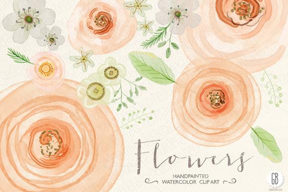 Watercolor Flowers Rose Ranunculus