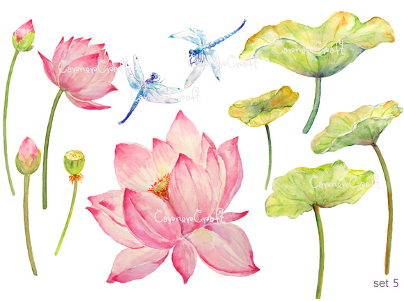 Watercolor Lotus And Dragon Fly