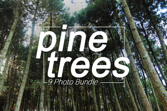 9 Photo Bundle Pine Trees