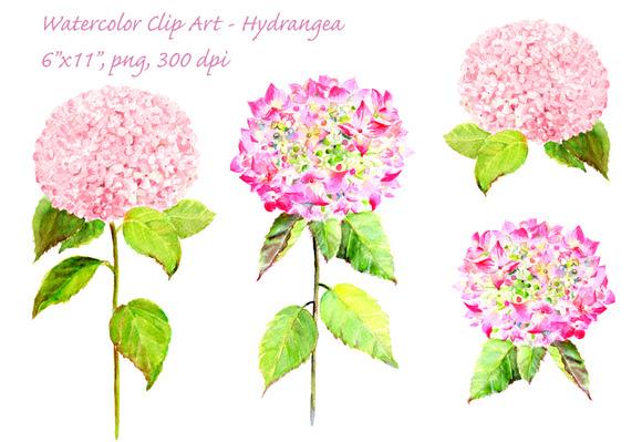 Watercolor Pink Hydrangea Clip Art