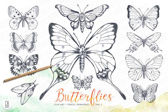 Butterflies Pencil Hand Drawn