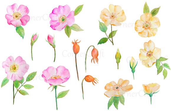 Watercolor Wild Rose Pink And Yellow