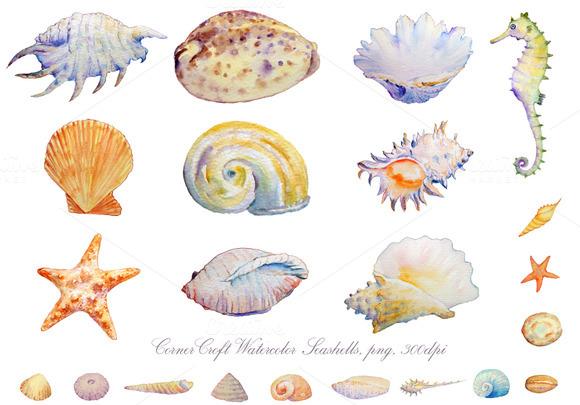 Watercolor Seashell Seahorse