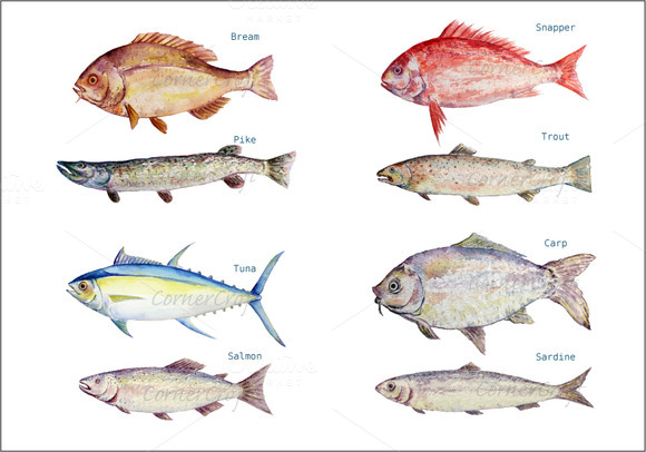 Watercolor Fish Clipart