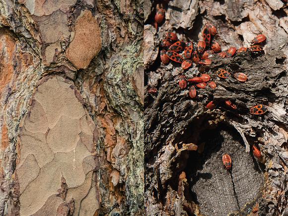 30 Hi-Res Wood Textures