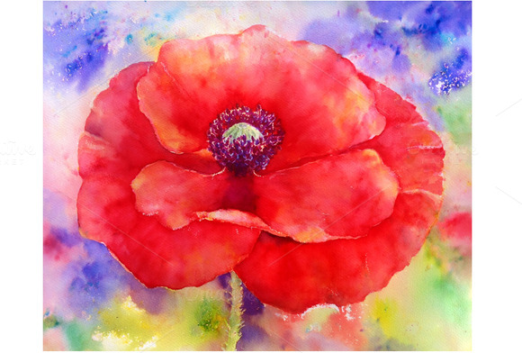 Watercolor Abstract Red Poppy
