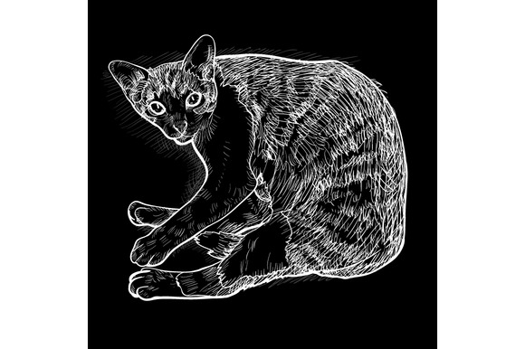White Drawing Of Lying Cat On Black