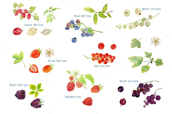 Watercolor Soft Fruit Clipart