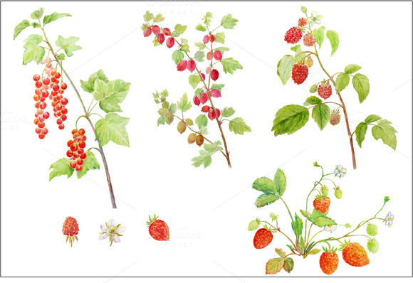 Watercolor Soft Fruit Branch