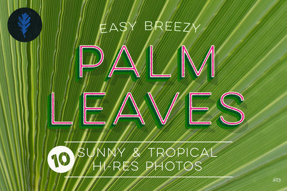 Photo Suite Palm Leaves