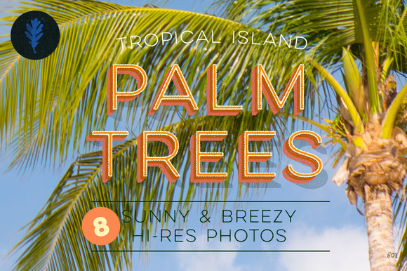 Photo Suite Palm Trees