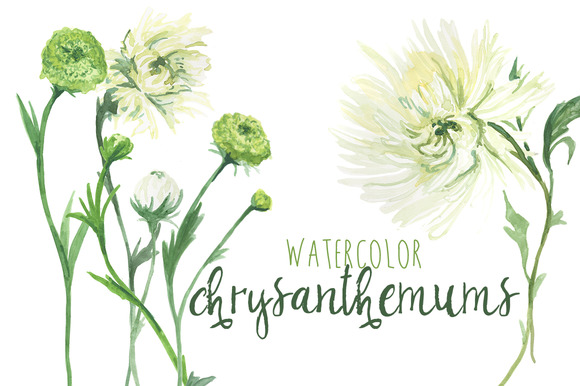 Watercolor Chrysanthemums Dahlias