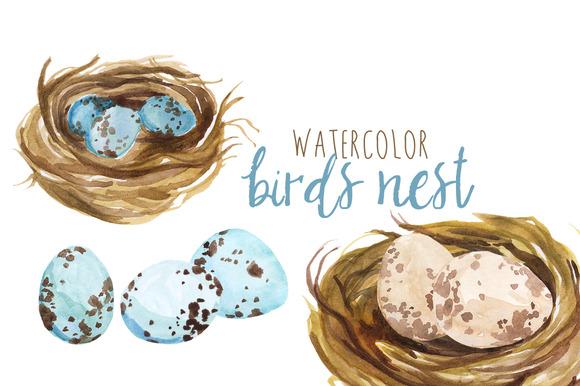 Watercolor Bird S Nest
