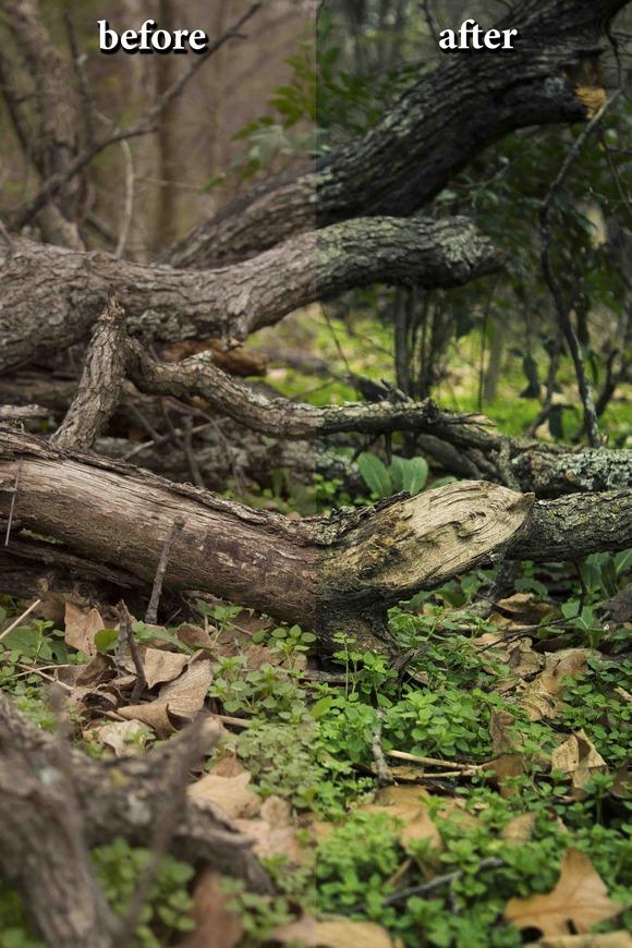 CameraRaw Preset ForestGreen