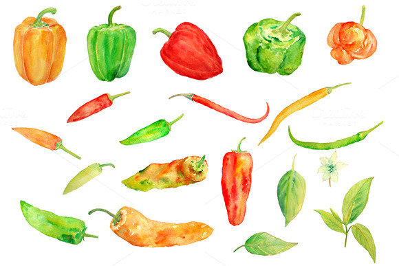 Watercolor Chilli Pepper Collection