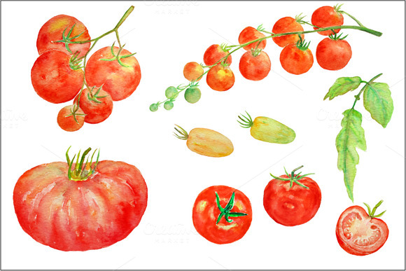 Watercolor Clipart Tomato