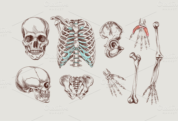 Human Anatomy Hand Drawn Elements