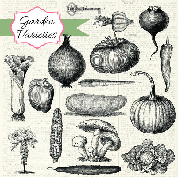 Vintage Vegetables Brushes