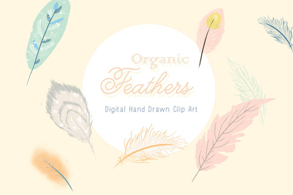 Hand Drawn Feather Clip Art