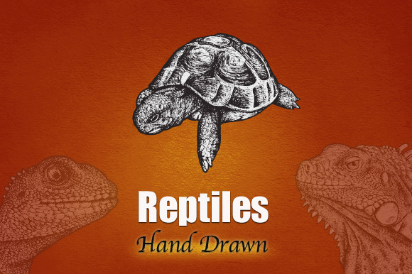 REPTILES Hand Drawn
