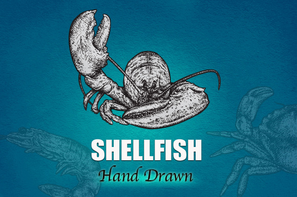 SHELLFISH Hand Drawn