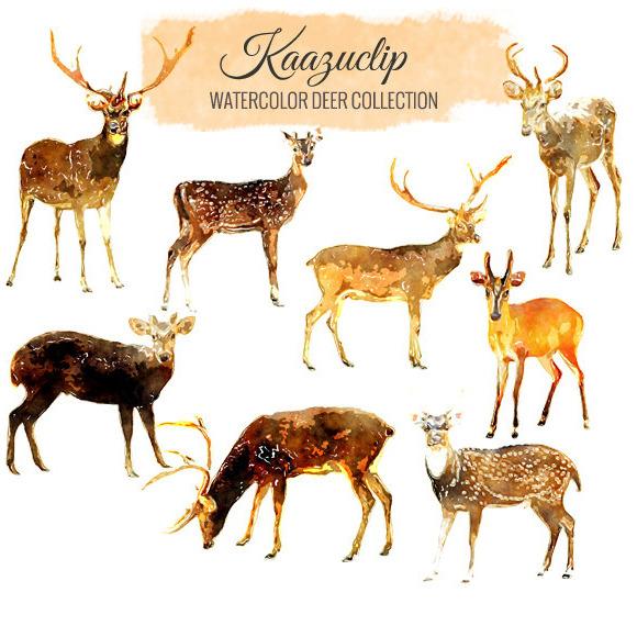 Watercolor Deer Collection