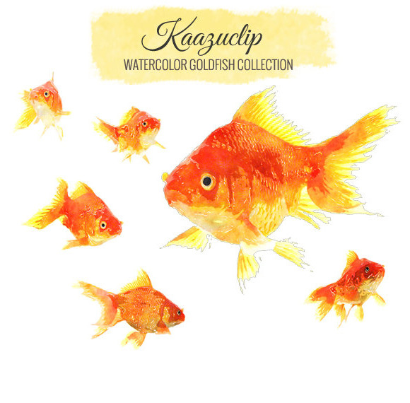 Watercolor Goldfish Collection
