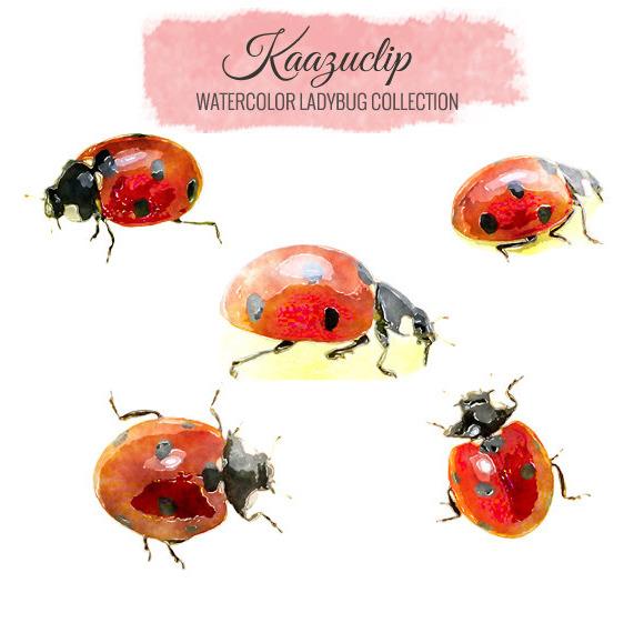 Watercolor Ladybug Collection