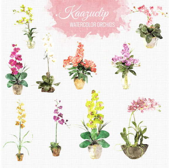 Watercolor Orchids Set