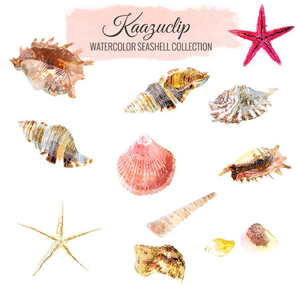 Watercolor Seashell Set