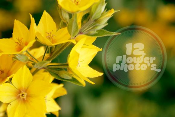12 Flower Photo S