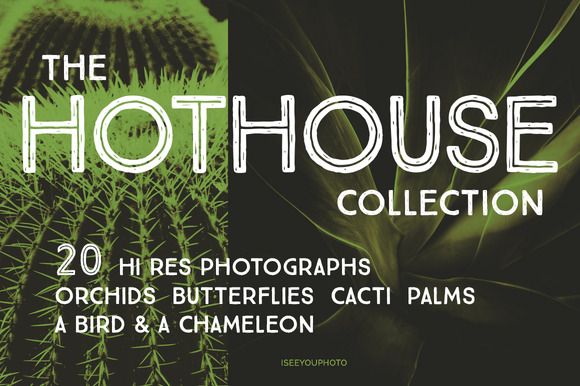The HOTHOUSE Collection