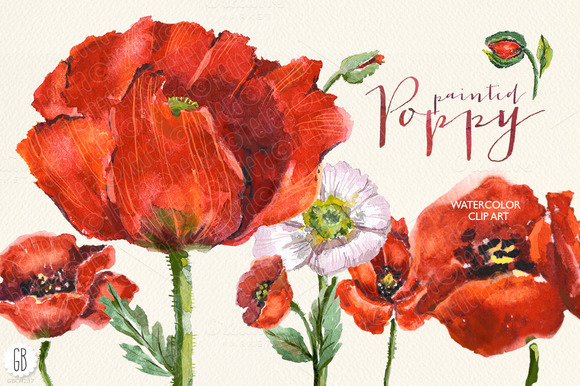 Aquarelle Watercolor Red Wild Poppy