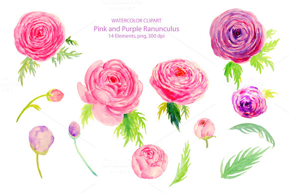 Wedding Watercolor Ranunculus