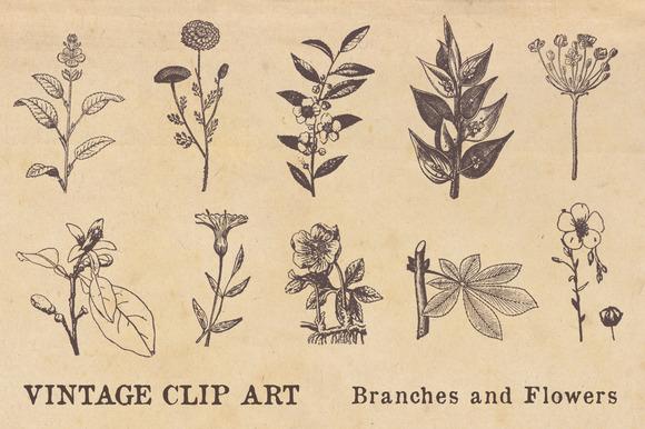 Vintage Clip Art Branches