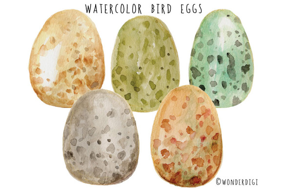 Watercolor Bird Eggs