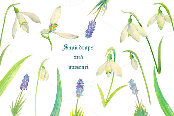 Watercolor Snowdrops Muscari