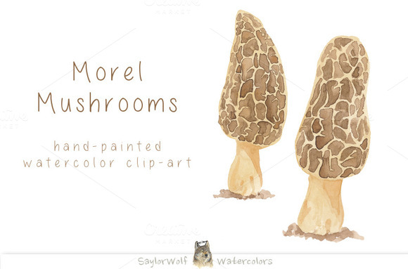 Watercolor Morel Mushrooms Clip Art